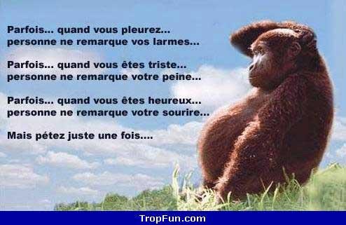 News Bouffer-le-cul